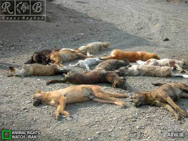 سگ های ولگرد شهری