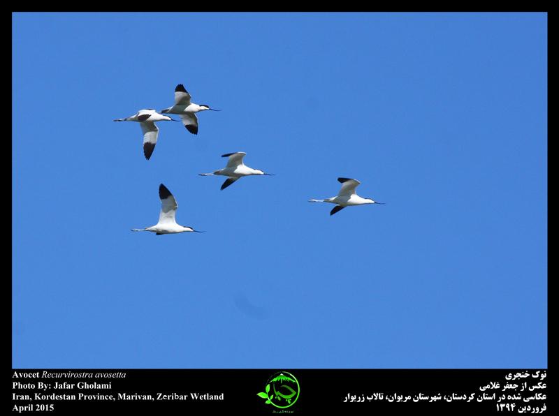 تغییرات اقلیمی پرندگان را مجبور به مهاجرت می کند