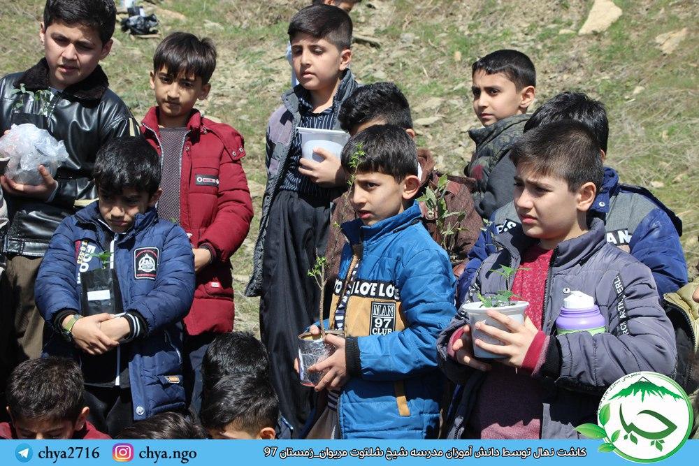 کاشت نهال توسط دانش آموزان مدرسه شیخ شلتوت مریوان