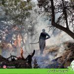 آتشسوزی جنگل – کۆڵیت حاجی