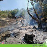 آتشسوزی جنگل – گهوێڵه