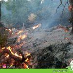 آتشسوزی جنگل – لێو