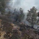 آتشسوزی جنگل – دۆڵهبێ