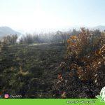 آتشسوزی جنگل – کوره موسوی