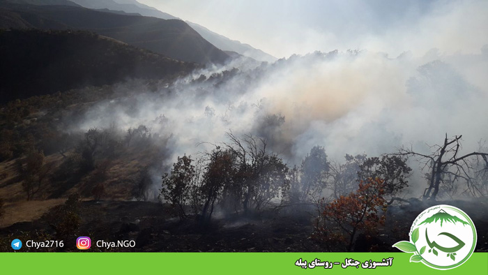 آتشسوزی جنگل – روستای پیله