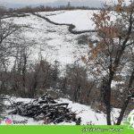 تخریب جنگل – روستای گوێزەکوێرە