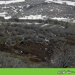 تخریب جنگل – سێف خواروو