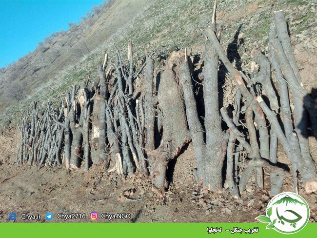 تخریب جنگل –   لەنجاوا