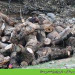 تخریب جنگل –  انجیران (پشت روستا)