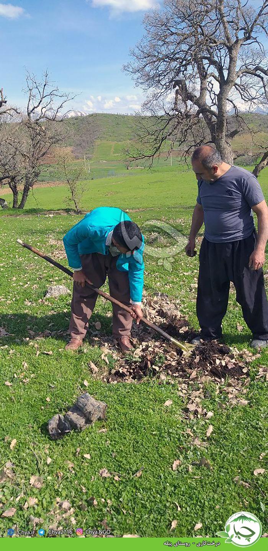 درختکاری –  روستاهای گڵیە و پێلە