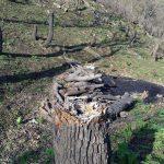 تخریب جنگل –  گاگل