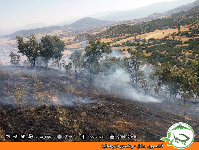 آتشسوزی جنگل – ڕەشەدێ (لەق لەقان)