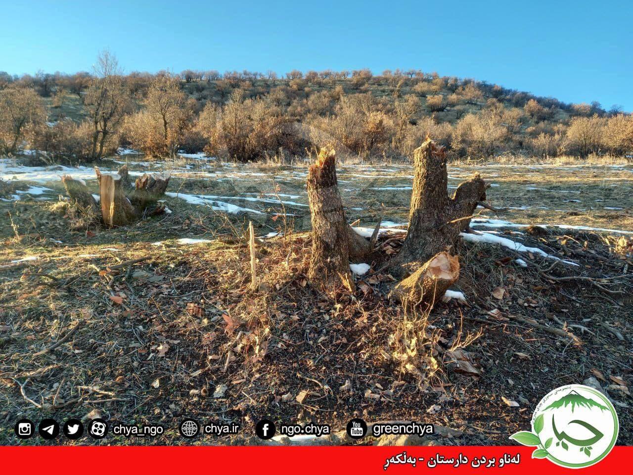 تخریب جنگل –  بەڵکەڕ