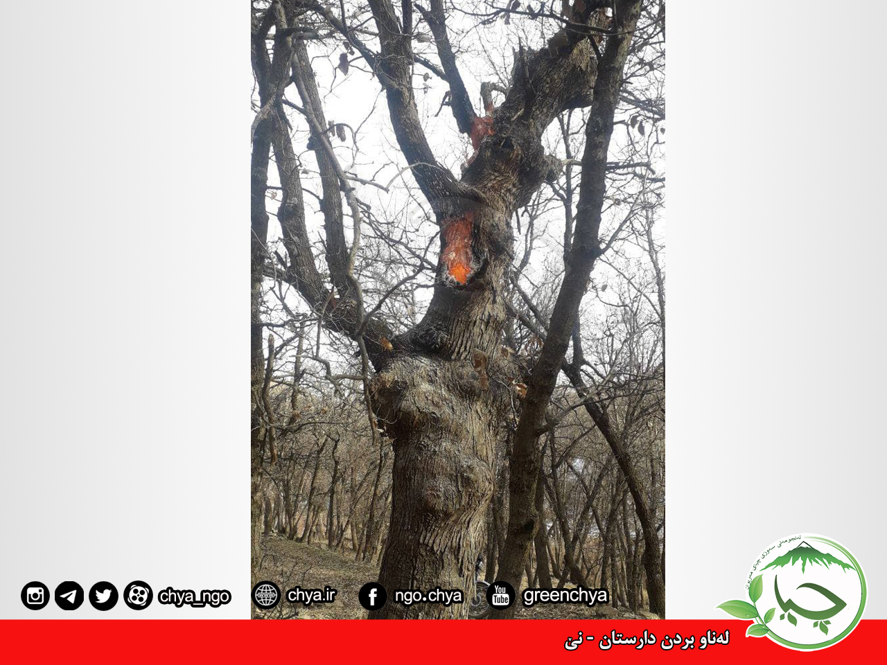 تخریب جنگل –  نێ