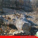 تخریب جنگل –  دارمازوار،ئاسنەوە