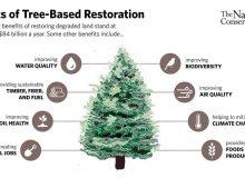 احیای درختان و جنگل ها چه مزایایی دارد؟