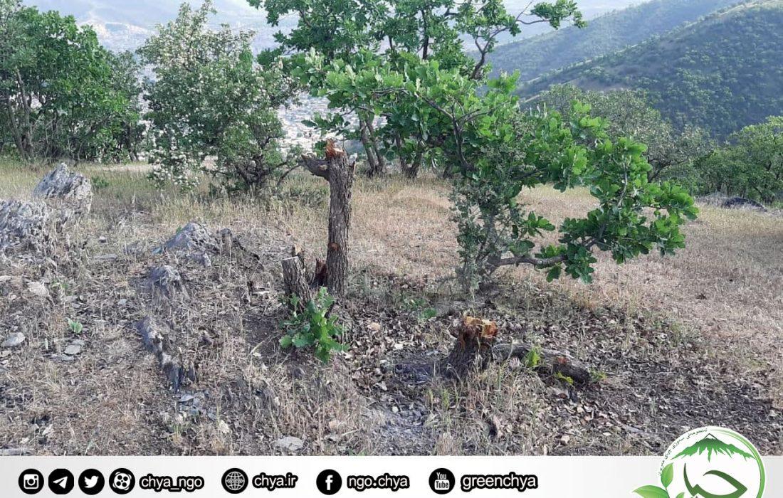 """تخریب جنگل – """" ملەی چاوگ """""""